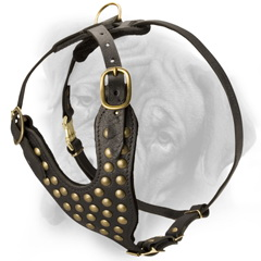 Studded harness