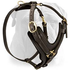 Quality pure leather dog harness for Bullmastiff