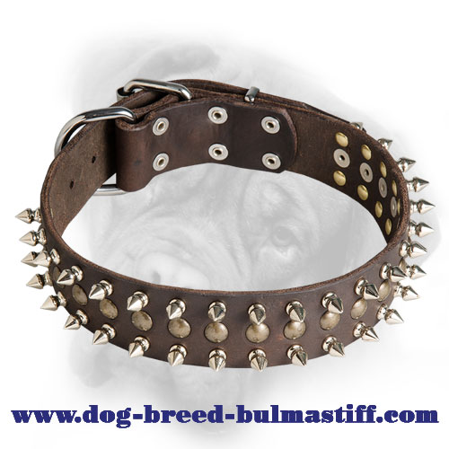 Fantastic Leather Bullmastiff Collar with Spikes and Studs