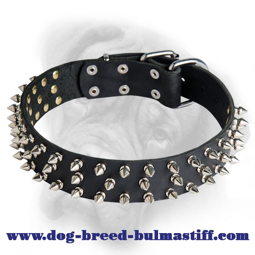 Splendid Leather Bullmastiff Collar Decorated with 3 Rows of Silver-Like Spikes