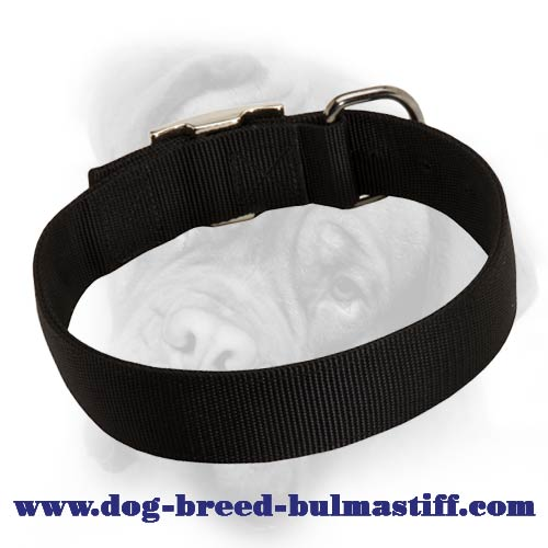 Wide 2 ply Nylon Bullmastiff Collar for Everyday Use