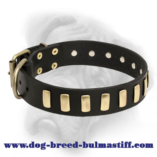 Deluxe Leather Bullmastiff Collar with Riveted Brass Plates