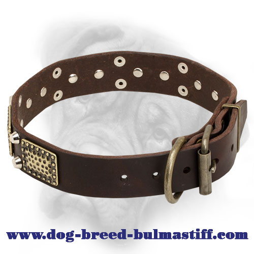 Top Quality Stylish Leather Collar for Bullmastiff Breed