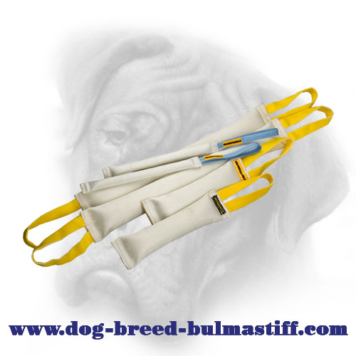 Think of the Future - Get This Set of Fire Hose Bite Tugs for Your Bullmastiff