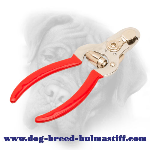 Nail Clipper - An Easy Way to Keep Your Bullmastiff Paws Looking Prime