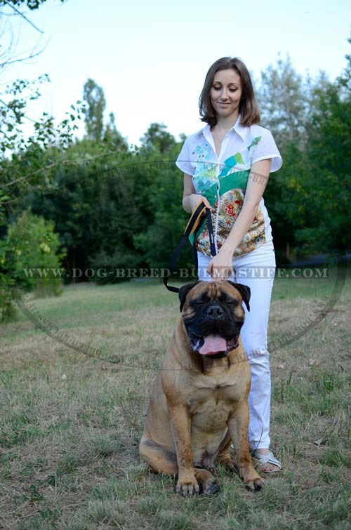 Bullmastiff leash of leather for utmost control