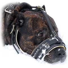 Cool leather muzzle