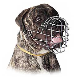 Buy new muzzle for max comfort of your dog