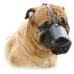 Muzzle is made of the pure leather