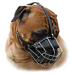 Wire basket muzzle for Bullmastiff
