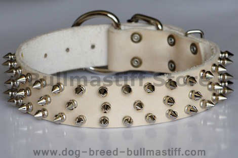 Dog Collars For Large Breeds